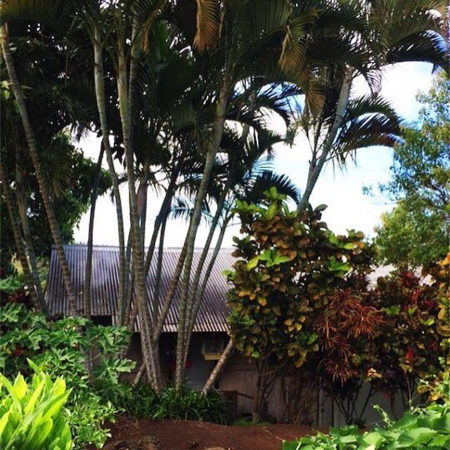 1994 Wai translates to water in Hawaiian My dad andhellip