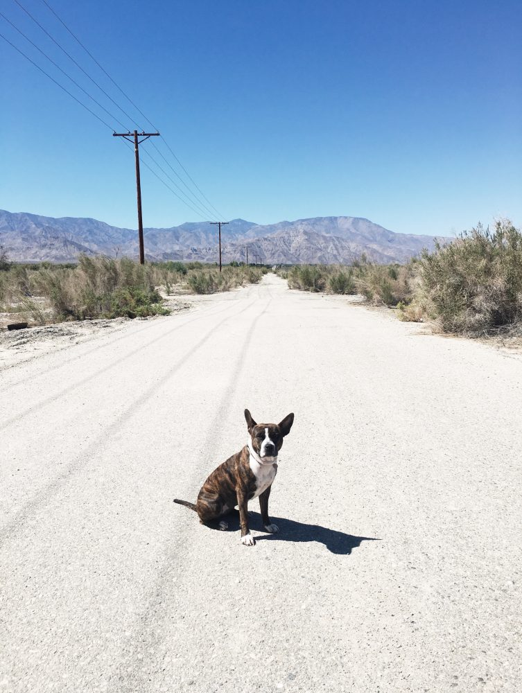 Dog (MoneyPenny) on a vacant road Near Salton Sea