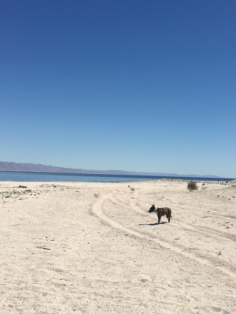 MoneyPenny Dog at the Salton Sea