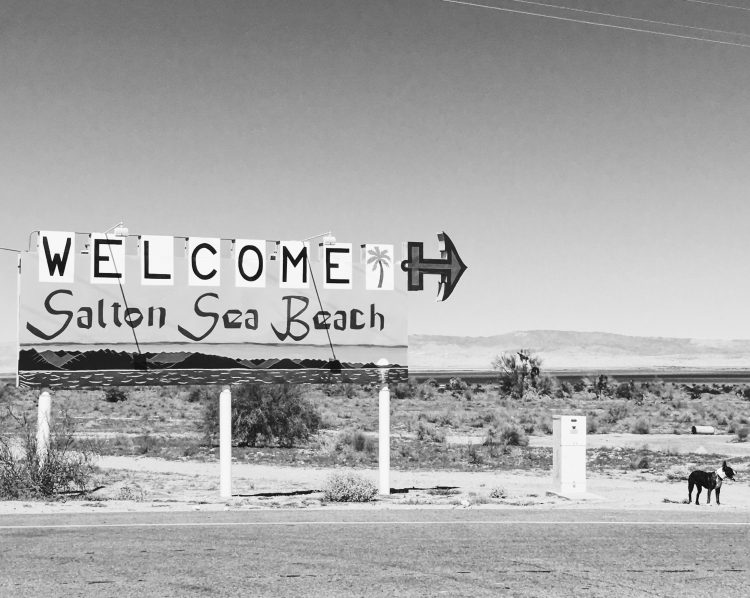 MoneyPenny Dog and Welcome Salton Sea sign